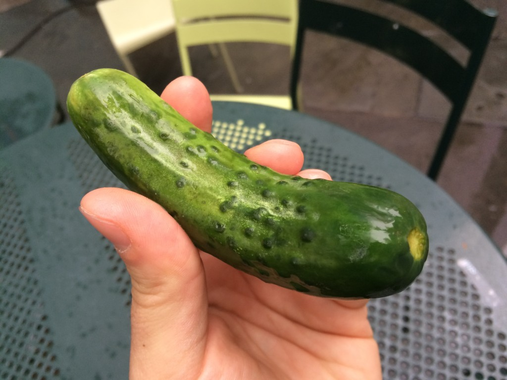 New Pickle at PICKLE ME PETE