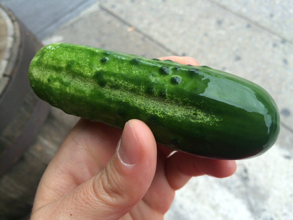 New Pickle at THE PICKLE GUYS